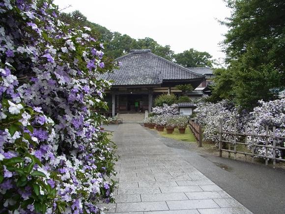 shizufan0093