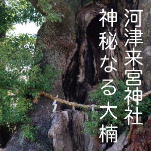 伊豆一番のパワースポット 河津来宮神社の大楠