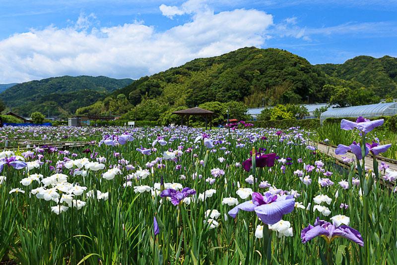 sightsee_flower-L