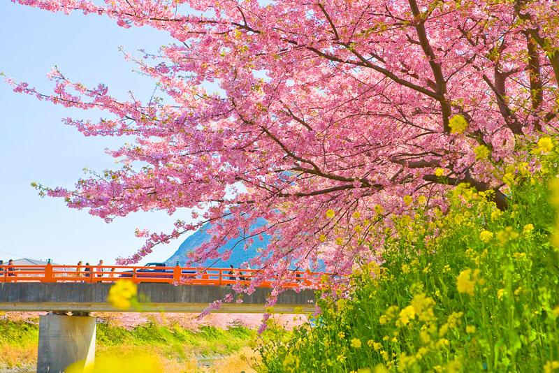 sightsee_sakura-L