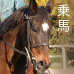 乗馬体験:天城ホースビレッジ