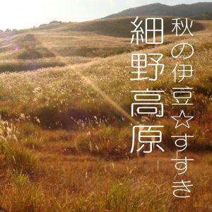 ☆秋の伊豆☆イチオシ【すすき】がすごいんです!!伊豆稲取 細野高原 禅の湯から20分